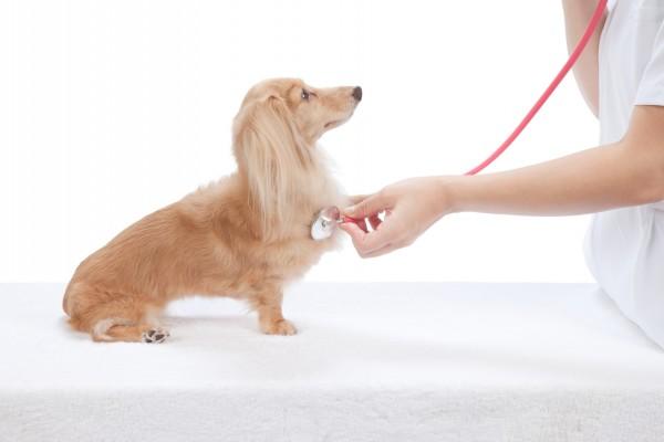 動物病院で診察を受ける犬