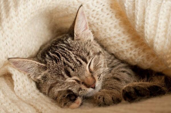 ニットに包まれて眠っている猫