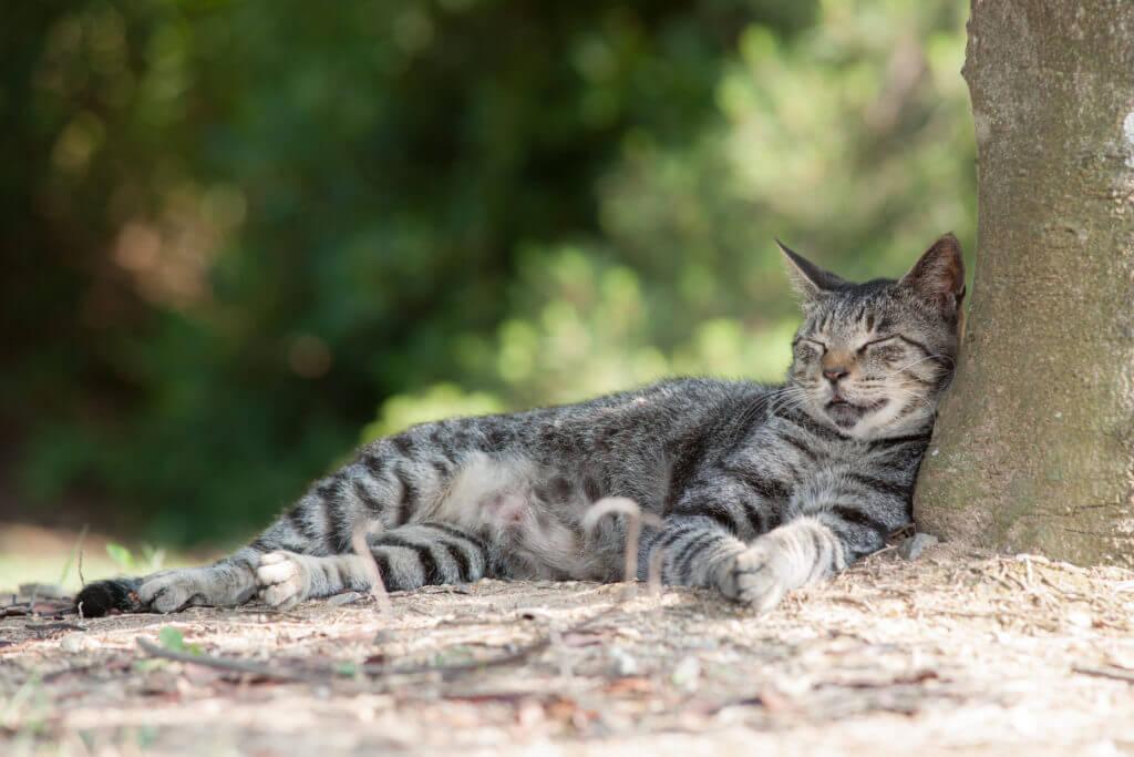 寝転ぶサバトラ