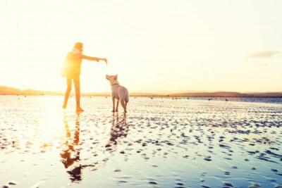 水辺にいる飼い主と犬