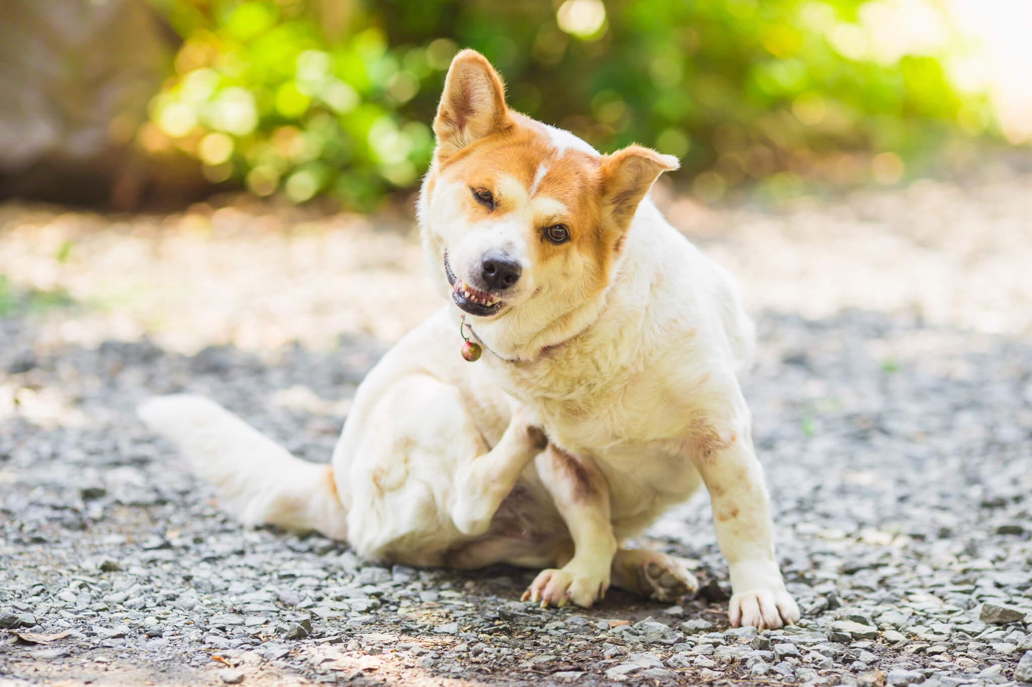 痒いところをかく犬