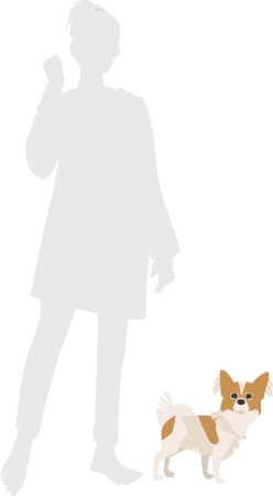 人とパピヨンの比較図