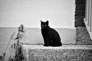 モノクロ黒猫