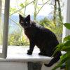 窓枠で光を浴びる黒猫