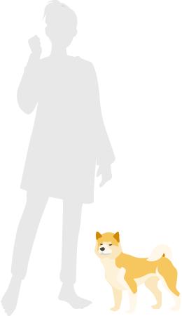 柴犬の大きさ比較
