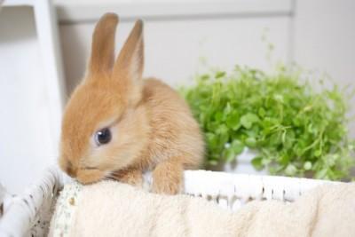 かをお覗かせているウサギ