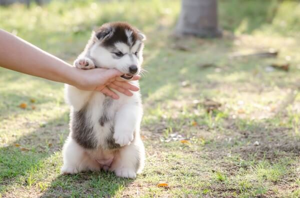 手を甘噛みする犬