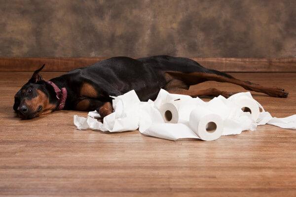 犬とトイレットペーパー