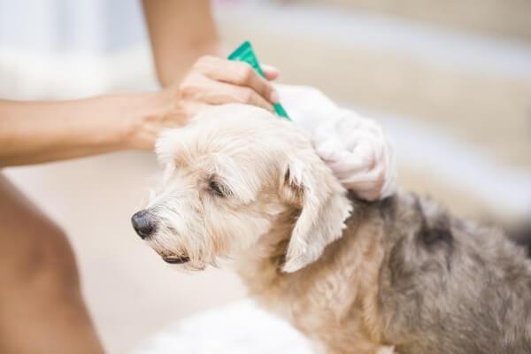 病院で検査を行う犬