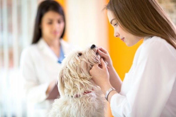 犬の歯をチェックする医者