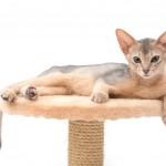 モフモフ!猫の毛についてのあれこれ豆図鑑