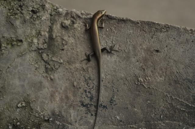 爬虫類に関する記事まとめ