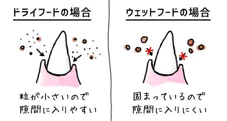犬の歯のイラスト