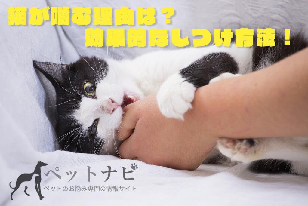 猫噛む理由が知りたい