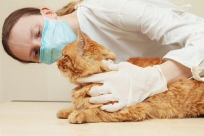 veterinary inspection