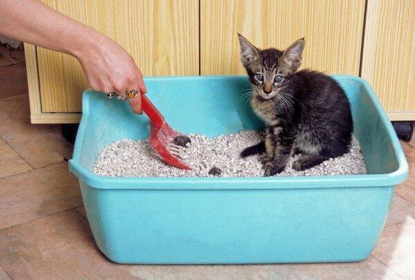 トイレで便をしている猫