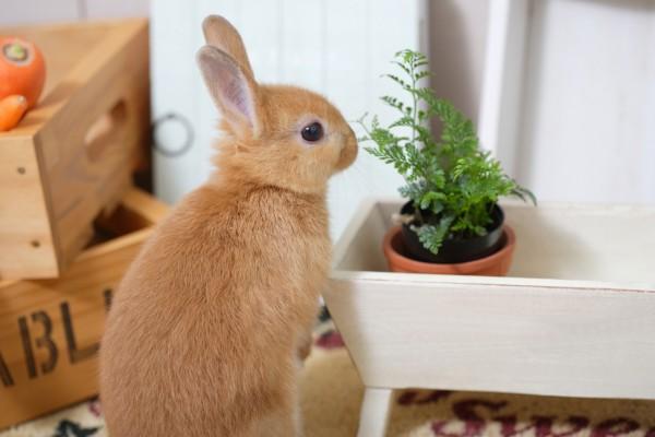植物を見つめるうさぎ