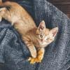 猫のくしゃみの3大原因!考えられる5つの病気とは