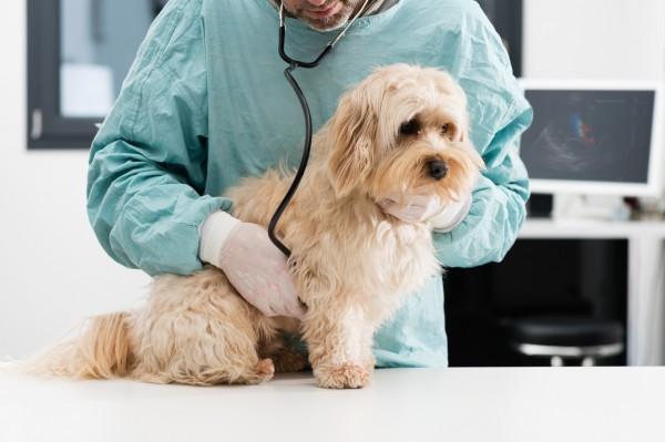 動物病院で診断を受ける犬