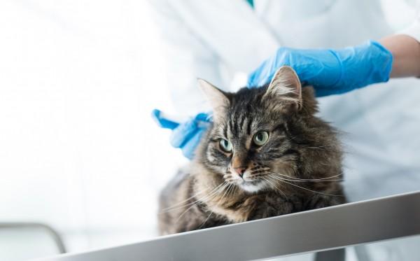 猫の病気の検査をしている医者