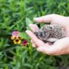 ハリネズミの5種類の餌の解説!給餌方法と注意点