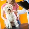犬の避妊手術の解説!費用・時期・注意点とは