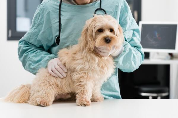 動物病院で検査を受ける犬