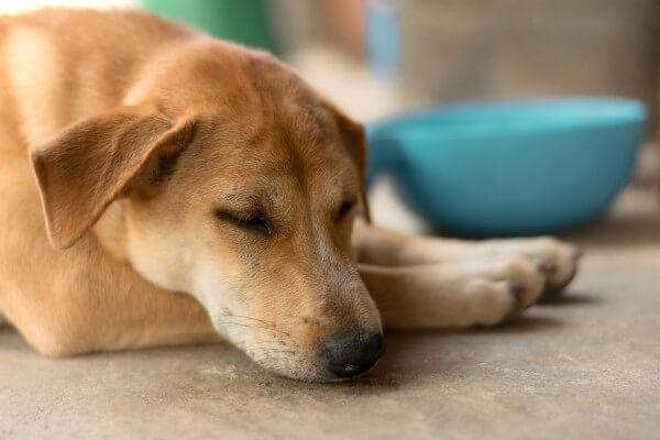 食欲不振の犬
