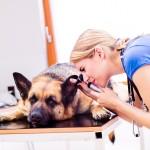 本当に良い動物病院を見分ける賢い選び方とは?