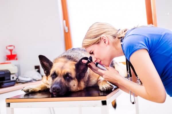 犬の検査を行うドクター