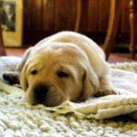 老犬……うちの犬はいつからそう呼ばれるの?