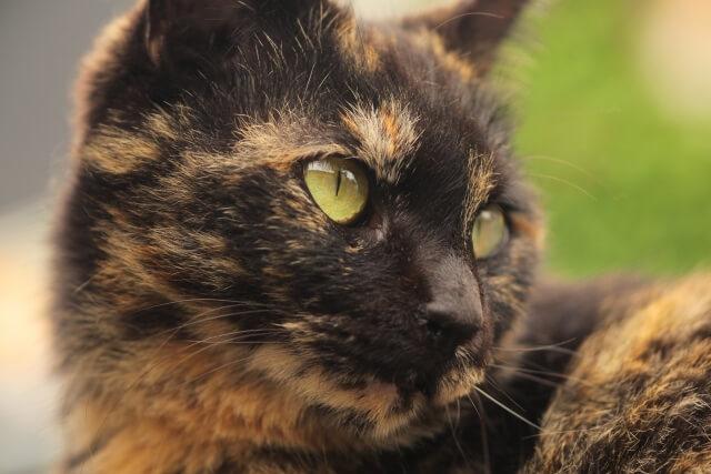 後ろを振り返ったサビ猫