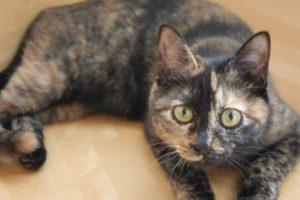 黒サビのサビ猫