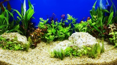 Aquascaping of the beautiful planted tropical freshwater aquariu