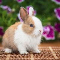 Little rabbit sitting in the garden in summer
