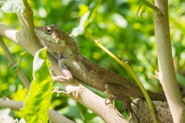 木に登っているトカゲ