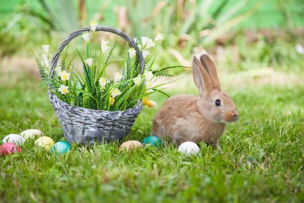 【ウサギ】ミニレッキスの性格の3大特徴!しつけのコツと注意点とは