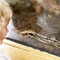 Kind blickt Schlange an