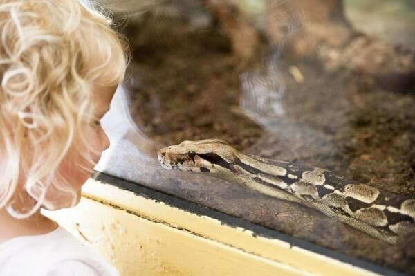蛇を見つめる女の子
