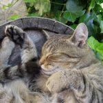 血便中の猫にオススメのキャットフードはコレだ!