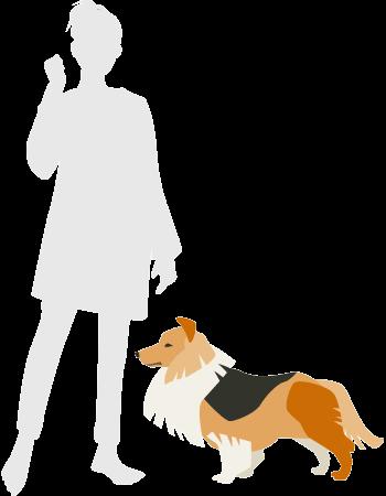 人とシェルティの比較図