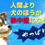 犬の熱中症に注意!熱中症の症状や対策、治療について