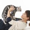 猫に関する記事まとめ