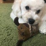 犬の誤飲・誤食の対処法まとめ