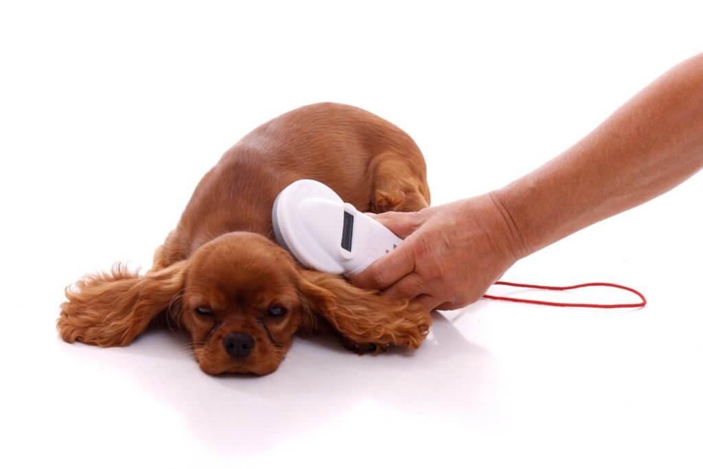 マイクロチップの読み取り中の犬