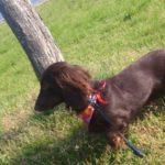 【悩】散歩中に愛犬が急に立ち止まってしまうのはなぜ?