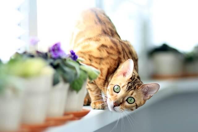 花を覗いているベンガル猫
