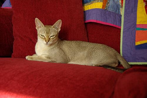 赤い椅子に座るシンガプーラ
