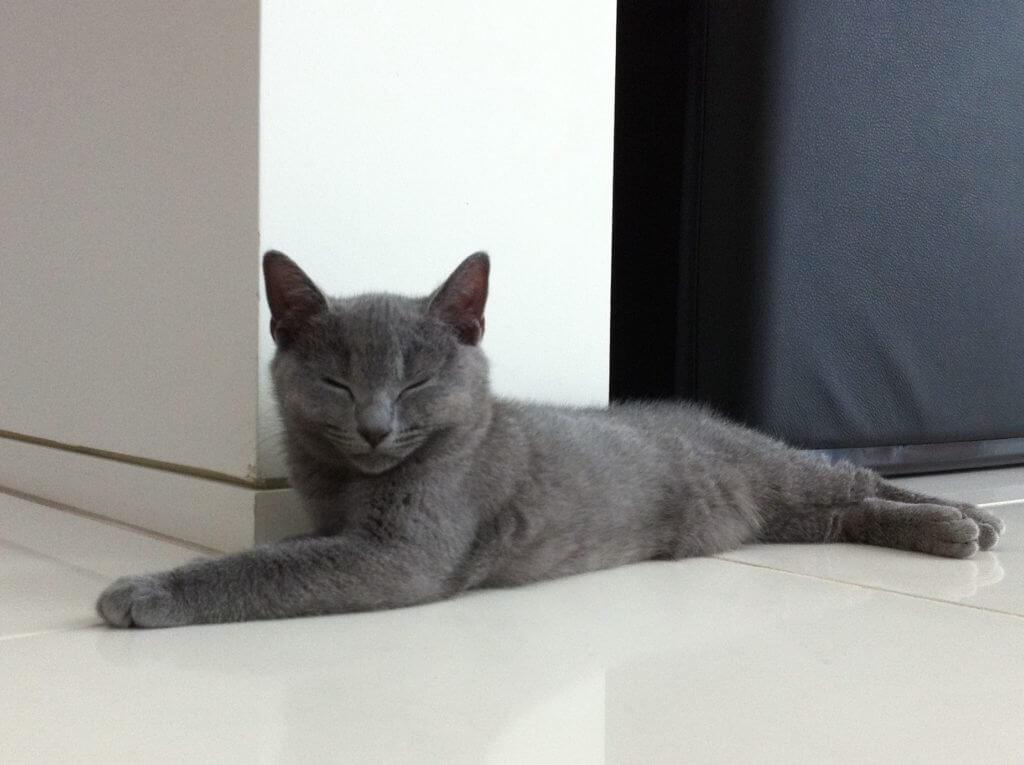 眠るシャルトリュー