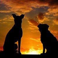 夕焼けを見つめる犬